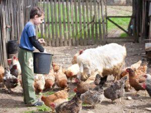 Помощь Многодетным Семьям От Государства В 2020 На Развитие Сельского Хозяйства