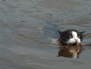 Выходные плавающие как понять ?