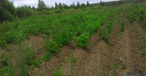 Минимальная цена аренды 1 га земли сельхозназначения